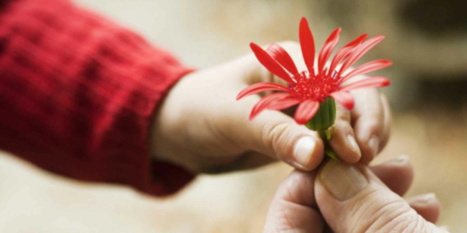 E questo è il fiore